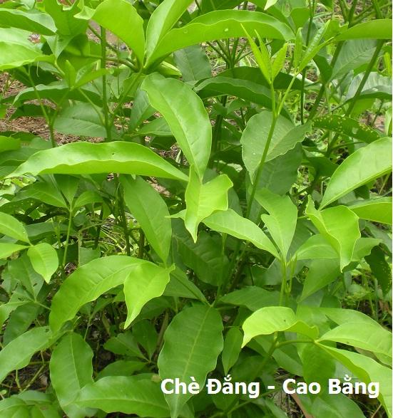 che-dang-cao-bang